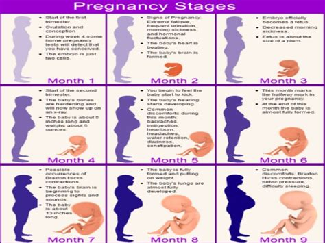 pregnancy stages the reproductive system and pregnancy