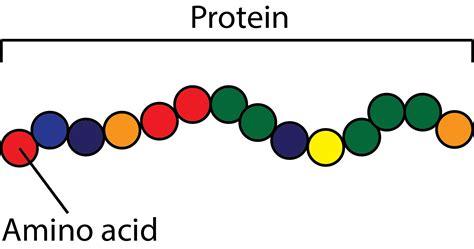 Do You Need Amino Acids To Detox Your by Backbone Vs Sidechain Holehouse Org