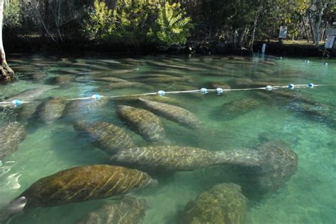 sw boat tours orlando fl the top 10 things to do near plantation on crystal river