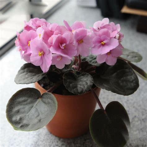 decorar los interiores con plantas plantas de interior con flor para decorar