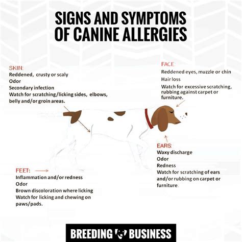 symptoms of allergies in dogs top 5 best hypoallergenic foods buying guide and reviews