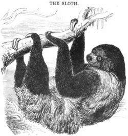be a sloth ebook sloth academic