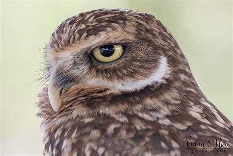 amazing bird photos on photo group meetup camerawe com