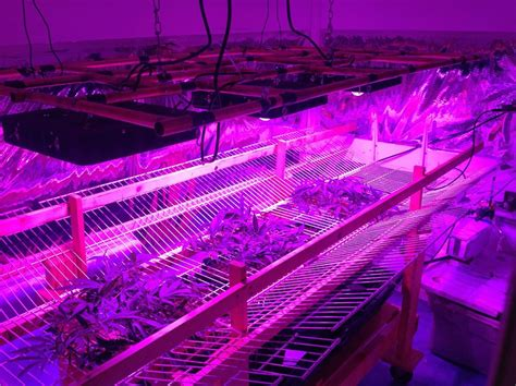 cob led grow light details questions about the spider cob led grow light