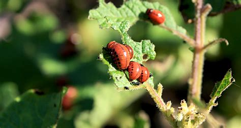 pests in garden sustainable pest methods for agriculture and