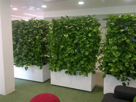 indoor climbing plants cable systems for indoor climbing plants c艫utare