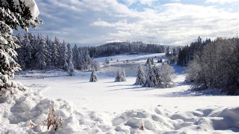 winter images beautiful winter forest wallpapers and images wallpapers