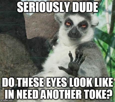 Lemur Meme - stoner lemur meme imgflip