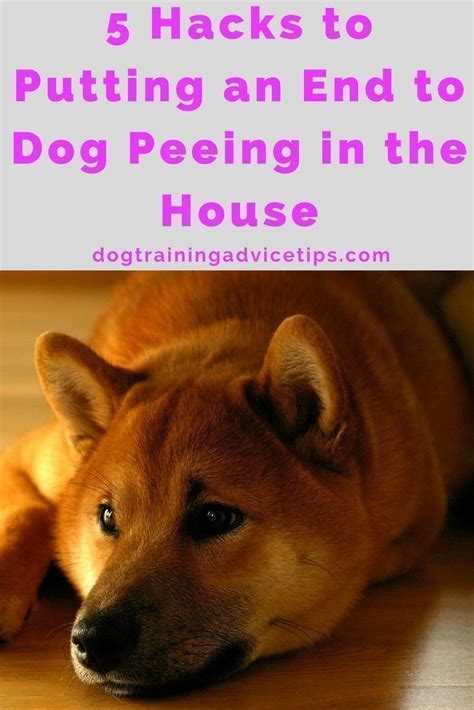 solutions for dog peeing in house the 25 best dog pee ideas on pinterest cleaning dog pee dog urine remover and dog