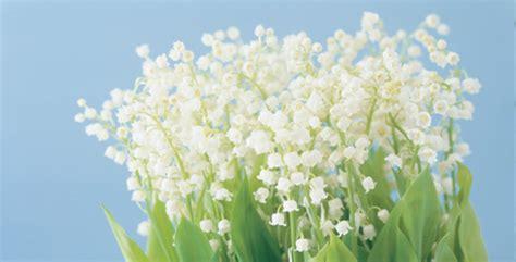 types of white flowers for wedding hjem 187 valgken starter l 248