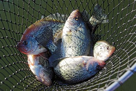 top options  february crappie fishing  north carolina