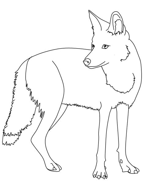 coyote coloring page 51942 notefolio