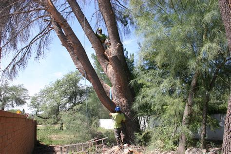 service tucson tree removal services tucson branching out tree service tucson