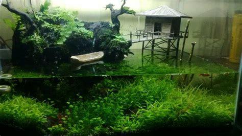 membuat karpet aquascape 6 macam tanaman karpet aquascape yang sering digunakan