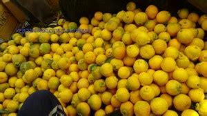 Bibit Kepel By Kebun Lemon jual bibit buah naga durian musang king lemon amerika