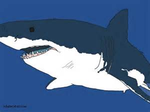 can sharks see color shark coloring pages toothy terrors