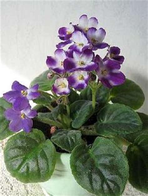Plante D Extérieur 6307 by 1000 Images About Plantes D Int 233 Rieur On