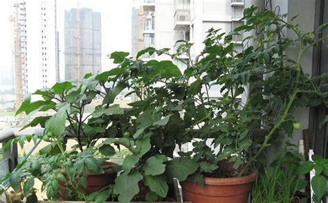 orto nel terrazzo orto nel terrazzo orto in balcone come coltivare orto