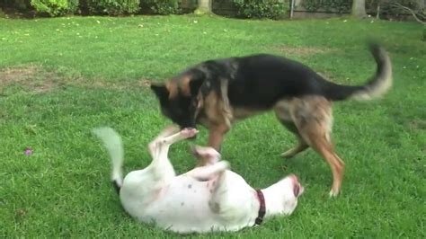 play with puppies nyc big dogs cutest