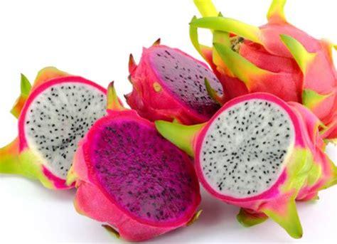 youtube membuat jus buah naga gambar mewarnai buah buahan naga warnagambar gambar kartun