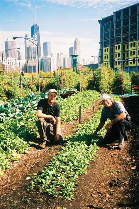 city farm gardening from an ex big issue vendor