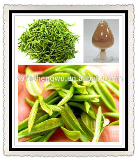 Gambir Cetachin tea extract catechin catechin gambir catechin extract products china tea extract catechin