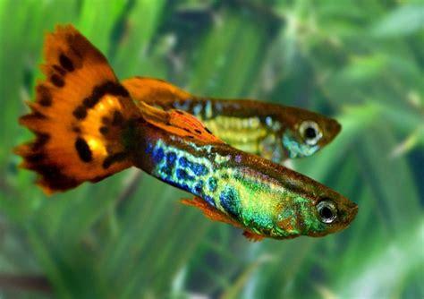 banche seme foto le quot banche seme quot create dagli animali 1 di 5