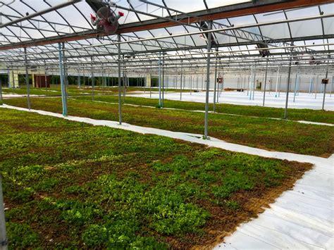 smarter technologies smart green technology green thumb turns roofs green
