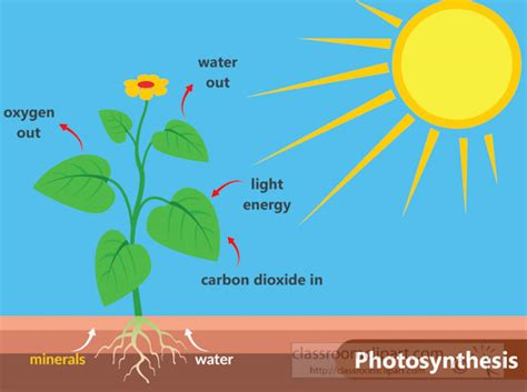 information about light energy science clipart photosynthesis in plants light energy
