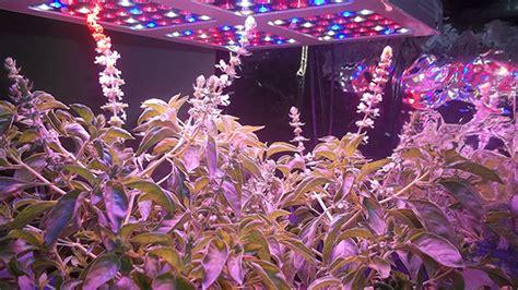 400 watt led grow light 400 watt led grow light from magiove growing hydroponic