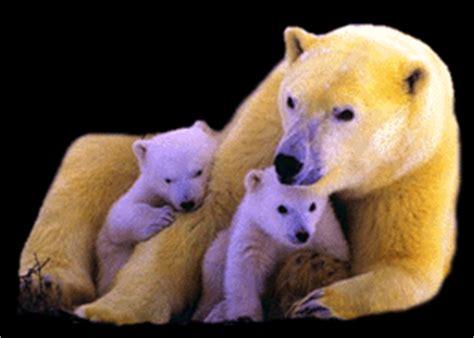 polar bear clipart animations