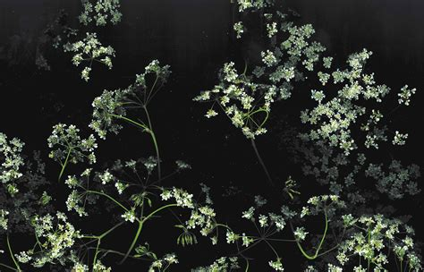 dark wallpaper with flowers dark floral backgrounds for free yo 187 jessica andersdotter