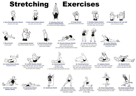 body stretching routine sports science