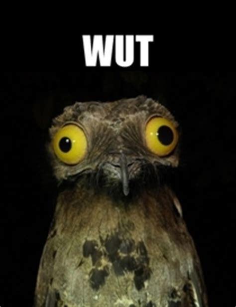 Potoo Bird Meme - you fuckers meme guy