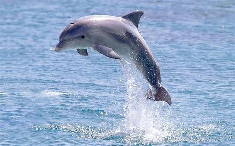 imagenes animales acuaticos fotos de animales marinos