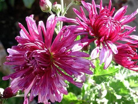 fiori dei morti a villalba fiori sulle tombe dei naufraghi di ledusa