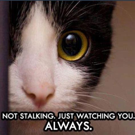 Funny Stalker Memes - 89 best stalking funny images on pinterest stalking