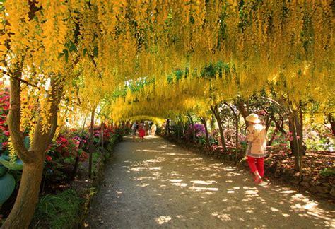 Bodnant Garden Laburnum Arch Laburnum Arch Bodnant Garden Geotopoi