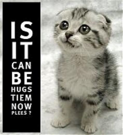 Cat Hug Meme - is it can be hugs tiem now plees know your meme