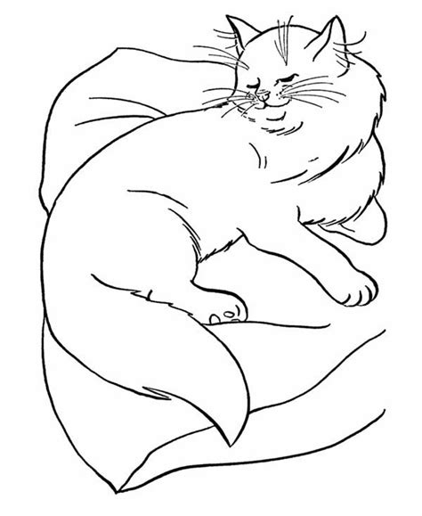 persian cat coloring page pages sketch coloring page