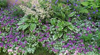 create colorful long lasting shade garden american meadows blog