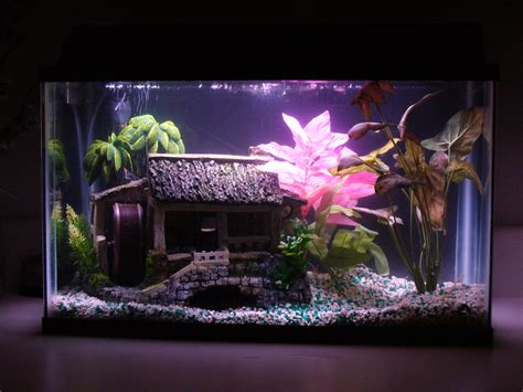 Decorating Ideas For Fish Tank Fish Tank Decorations 10 Gallon Diy Betta Fish Tank