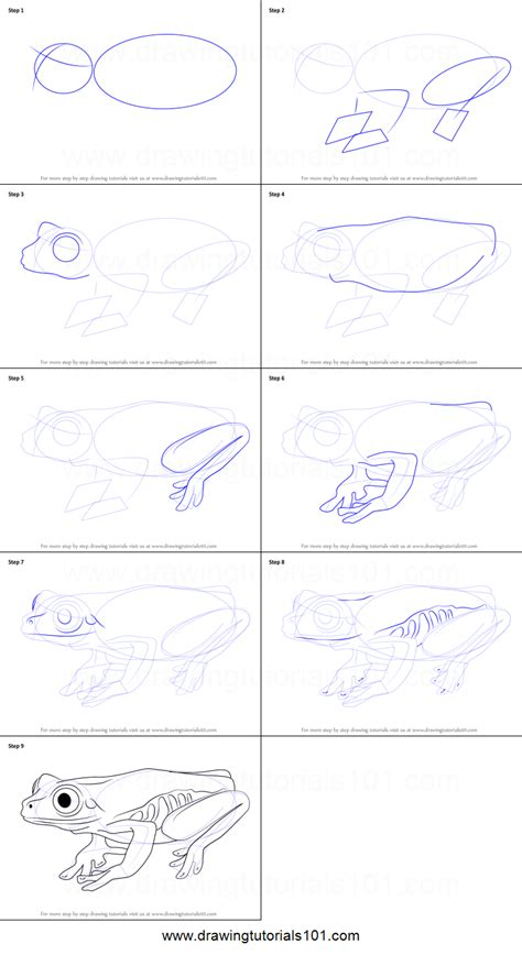 Drawing A Tree Frog Step By Step by How To Draw A Tree Frog Printable Step By Step Drawing