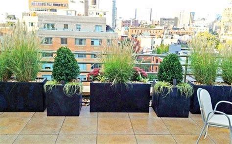 vasi da terrazza piante vaso piante da terrazzo migliori piante da vaso