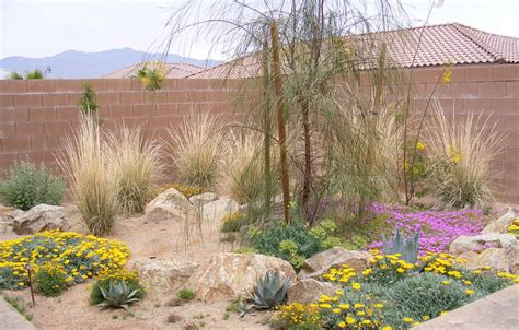 backyard desert landscaping ideas desert landscaping picks the plants ideas dzuls interiors