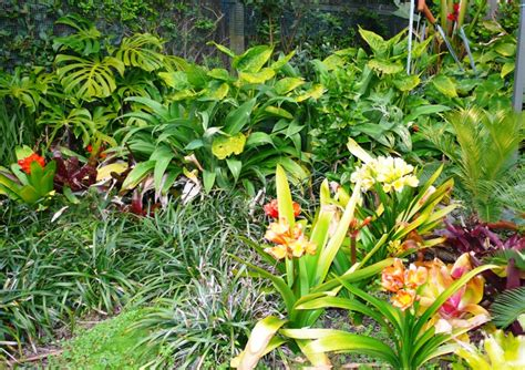 sub tropical planting   Natural Gardens