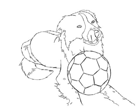 coloring page border collie border collie coloring pages coloring home