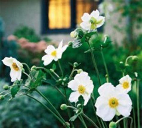 Die Sch Nsten Balkonpflanzen 3395 by Die Sch 246 Nsten Wei 223 En Blumen F 252 R Ihren Garten