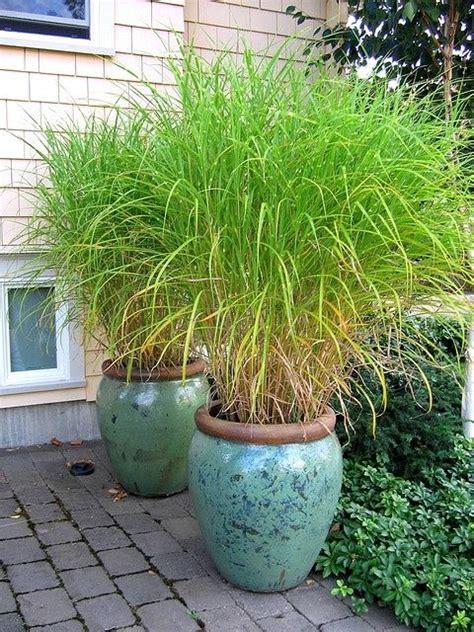 pretty grass in pots pots decoration pinterest