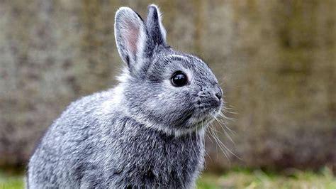 loewenzaehnchen kaninchen zdftivi